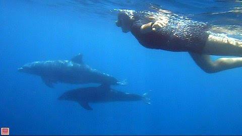 Dauphins à Petite Terre