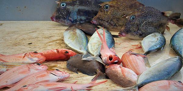 Marché poissons à Marie-Galante